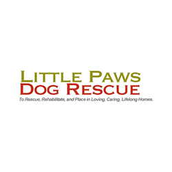 Little Paws Dog Rescue